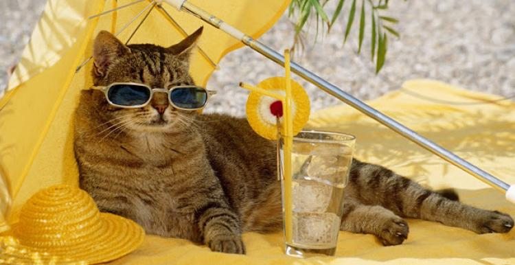 image of a cat sunbathing on sand, with sunglasses and a cool drink