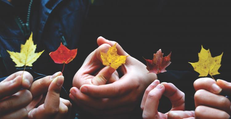 Fingers holding leaves