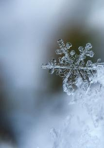 Close up of snowflake in winter